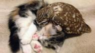 Tierische Liebe im Coffee Shop