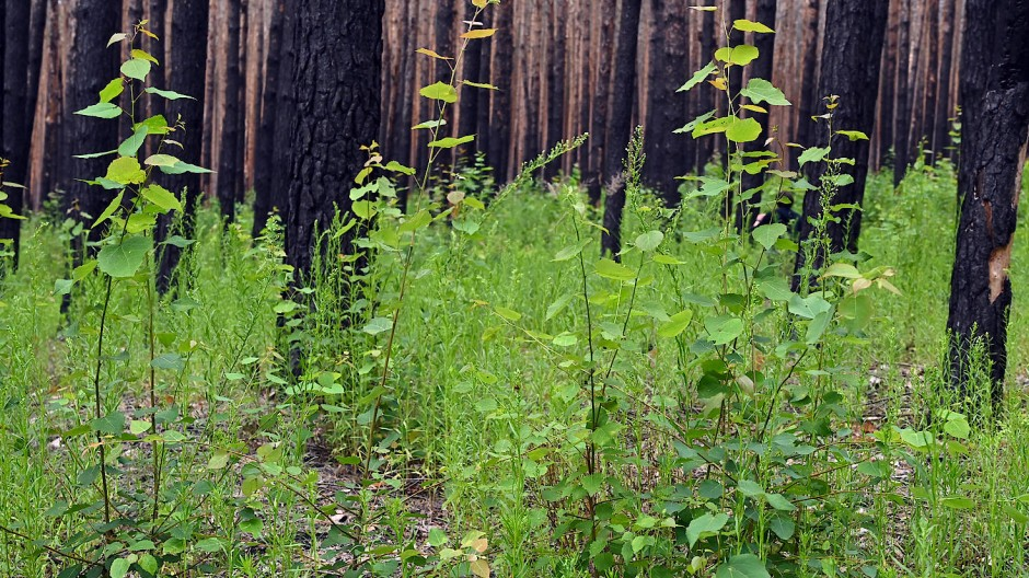 Die Hochschule für nachhaltige Entwicklung Eberswalde greift unter anderem auf ein 28 Hektar großes Waldstück zu Forschungszwecken zurück.