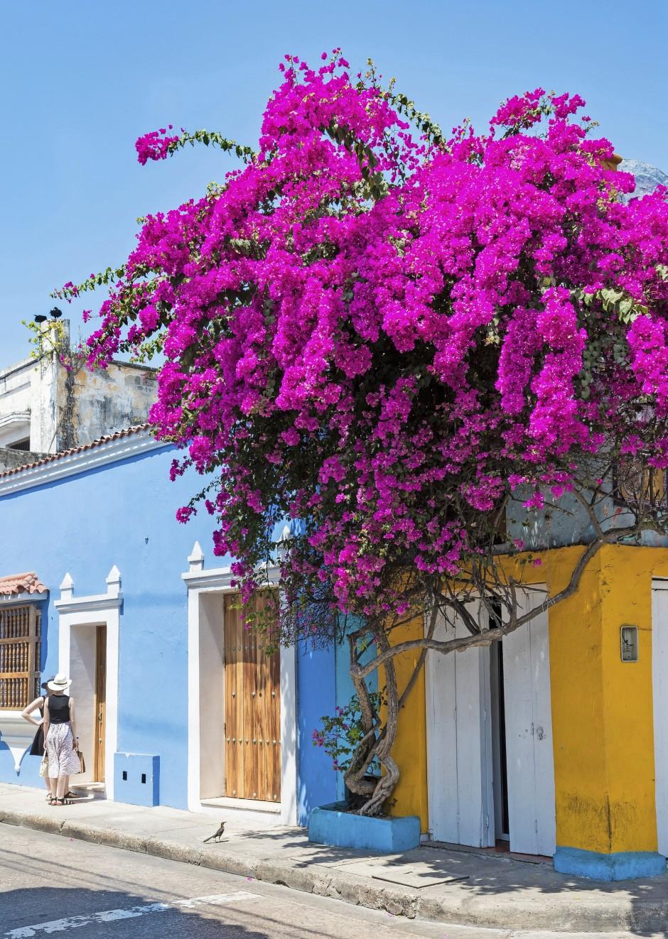 Blühendes Trugbild: Kaum ein Haus im historischen Zentrum von Cartagena wird noch von Einheimischen bewohnt, weil fast alle Gebäude in Touristenunterkünfte umgewandelt worden sind.