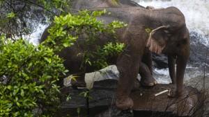 Weitere Elefanten stürzten Wasserfall hinab