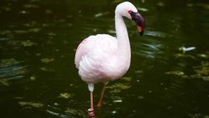 Wegen Vogelgrippe verhängte Stallpflicht aufgehoben