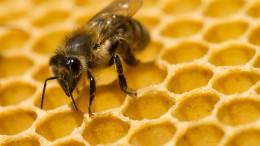 Rechnende Bienen und selbstbewusste Fische