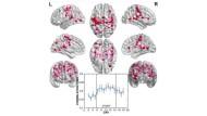 """Netzwerk im sensorischen Kortex: Mit der Lektüre von Harris´ """"Pompeji"""" hat sich was getan im Hirn"""