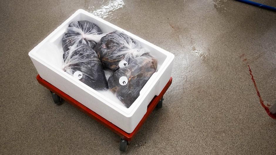 Hauptsache, auf Eis: Fischrogen des Kaviarproduzenten Dieckmann & Hansen