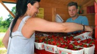 Schälchenware: Erdbeerverkauf an einer Bude zwischen Hofheim und Kriftel.