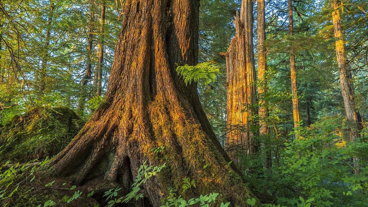 Alaskas Dilemma: Forst oder Lachs