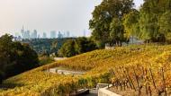 Paradiesisch: Weinstöcke am Frankfurter Lohrberg