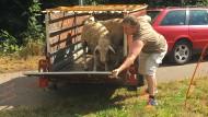 Bernd Spindler kämpft dafür, dass er seine Schafe künftig mit seinem Mercedes-E-Auto herumfahren kann.