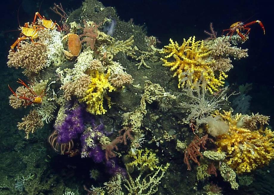 14 Korallen, einen Seestern, elf Schwämme sowie vier Krustentiere entdeckten die Forscher.