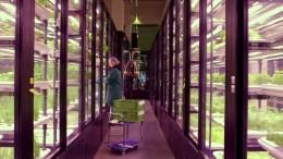 Berliner Start-Up für Gemüse erobert Amerika