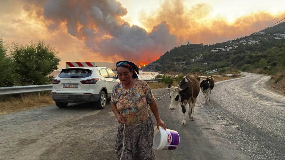 Auf der Flucht: Eine Frau aus Cokertme bringt sich und ihre Kühe vor dem Feuer bei Bodrum in Sicherheit.