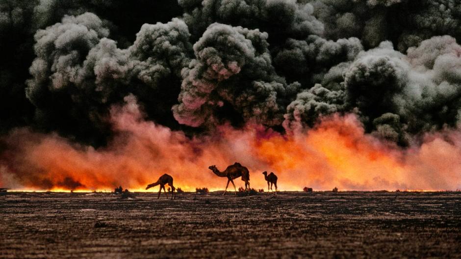 Das Etikett Kriegsreporter mag McCurry nicht: Kamele vor brennenden Ölfeldern auf der Suche nach Wasser (Kuweit 1991).