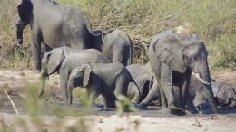 Die faszinierende Tierwelt im Kruger Nationalpark