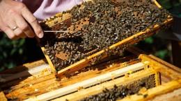 Die fleißigen Bienen der Regierung