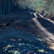 Zurück bleibt Ruß: Eine Woche nach dem Ausbruch des verheerenden Waldbrandes bei Lübtheen sind die Flammen erloschen.