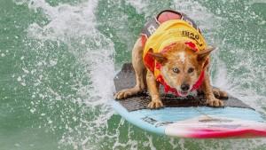 Die Surf-Weltmeisterschaft für Hunde
