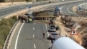 Elefant stirbt bei Unfall in Spanien