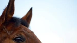 Verhaftung im Pferdefleischskandal