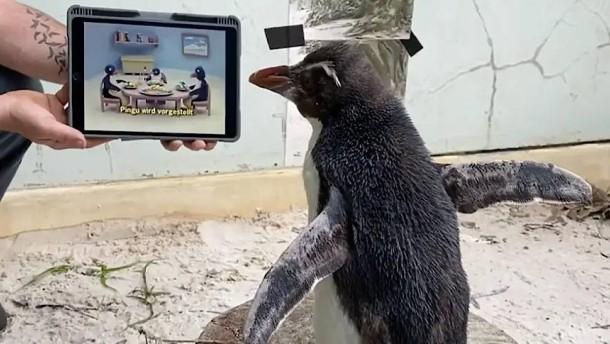 """Mit """"Pingu"""" und Tierdokus fühlt er sich weniger alleine"""