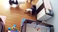 Neunjähriger rettet fallendes Baby
