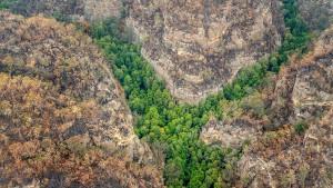 Australische Feuerwehr rettet Millionen Jahre alte Baumart vor Bränden