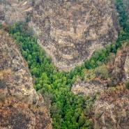"""Die knapp 200 """"Dinosaurier-Bäume"""" stehen an einem geheimen Ort in den australischen Blue Mountains."""