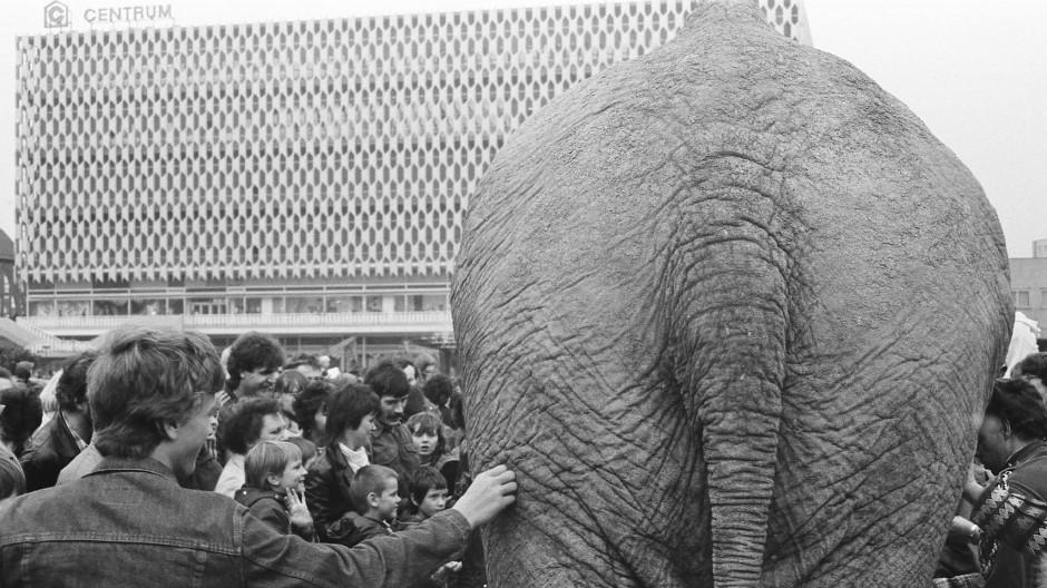 Zirkus-Elefant am Alexanderplatz, Ost-Berlin 1984