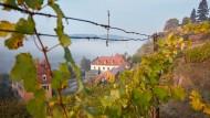 Blick auf das Weingut Martin Schwarz (Mitte), morgendliche Stimmung mit Nebel über der Elbe.