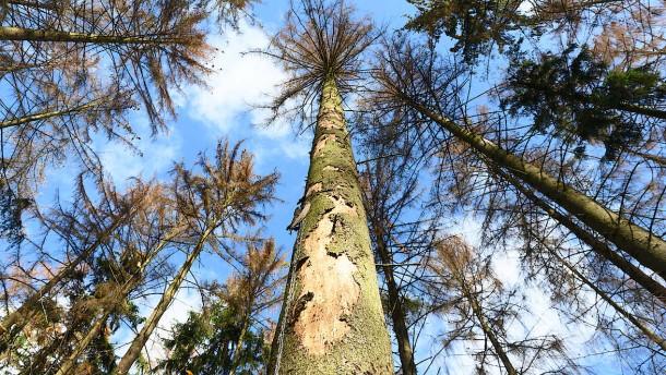 Empörungsspirale, Konzeptvergabe, Waldschäden