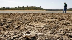 Chile leidet unter extremer Dürre