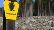 In den trockenen Wäldern des Nationalparks Harz herrscht derzeit Waldbrandstufe 3.