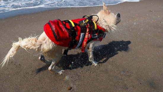 Hunde-Baywatch an Italiens Stränden
