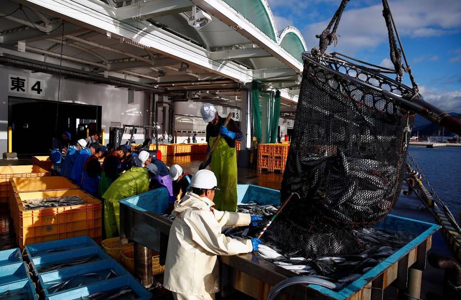 Sehr viele Leute arbeiten daran, dass der Fisch bald auf dem Markt und in den Restaurants und Geschäften verarbeitet und verkauft werden kann.