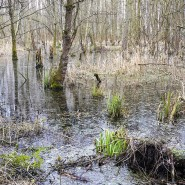 Mit Gift und Helikoptern bekämpft: In Feuchtgebieten wie dem Lampertheimer Bruch gedeihen Insekten sonst in Massen.