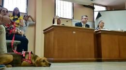 Hund im Zeugenstand
