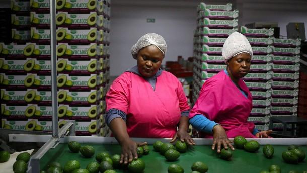 Eine neue Haut für Avocados