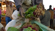 Die Droge Khat wird häufig in Teilen Afrikas konsumiert.