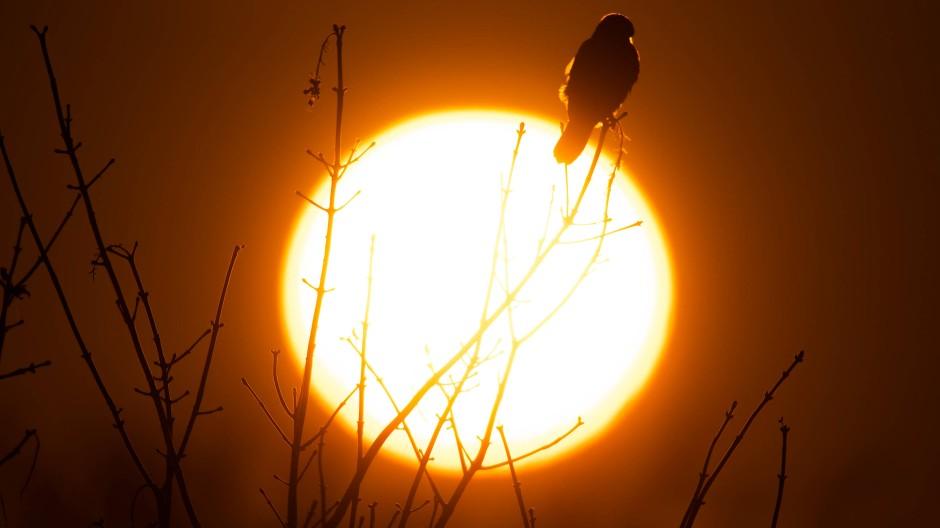 Nun gibt es den Beweis: Obwohl bereits erwartet wurde, dass der CNO-Zyklus in der Sonne abläuft, ist er bisher nie beobachtet worden (Symbolbild).