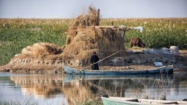 Büffel, Fische, Vögel und Schilf: Daraus besteht das Auskommen der Menschen in der irakischen Sumpflandschaft