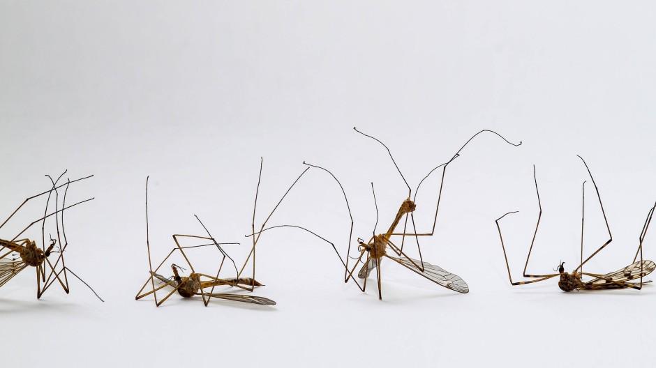 Chemische Keule gegen Insekten: Bei harmlosen Schnaken funktioniert das noch.