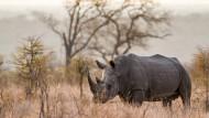 Im Kruger-Nationalpark: Die Zahl der gewilderten Nashörner in Südafrika ist zuletzt zurückgegangen.