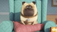 """Der Animationsfilm """"Pets"""" macht es sich an der Spitze der Kinocharts bequem. Im Bild: Der Mops Mel, gesprochen von  Bobby Moynihan."""