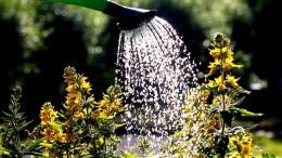 Berliner bewässern durstige Stadtbäume