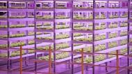 Salate und Kräuter aus Indoor Farmen sind besonders umweltfreundlich