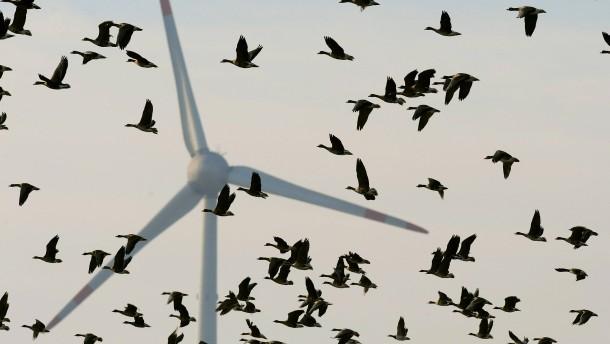 Windräder vor Artenschutz