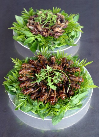 Mehlwürmer Bekämpfung insektennahrung grille mit dip gefällig essen trinken faz