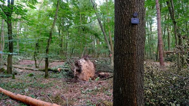 50 Bestattungsbäume müssen nach Unwetter gefällt werden