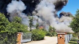 8000 Schweine bei Brand auf Bauernhof verendet
