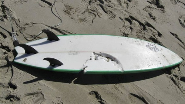 Junger Surfer stirbt bei Hai-Attacke