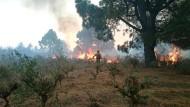 Mehrere hundert Menschen mussten aufgrund des Brandes ihre Häuser verlassen.